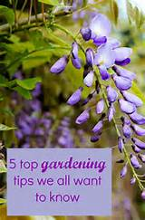 top gardening tips we all want to know - Thrifty Home