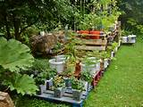 Container gardening on pallets a success (Willem Van Cotthem)