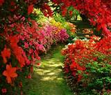 red hidden path garden path ideas pinterest