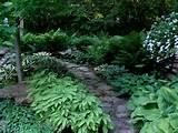 woodland garden walkway gardens pinterest