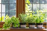 Indoor Herb Garden Ideas | GetBusyGardening.com