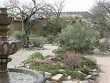 Tucson Botanical Gardens | Cactuses | Pinterest