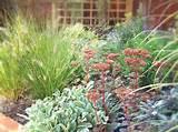 planting | Garden | Pinterest