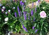 Garden Idea: Larkspur, Iris, & peony | Garden | Pinterest
