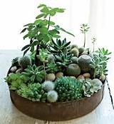 miniature garden perfect for a small space