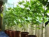 balconyplants