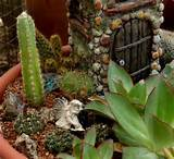 world existing within a container creating miniature or fairy gardens