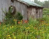 rustic photograph garden shed country garden by simplyartful