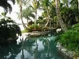 tropical pool design swimming pool pinterest