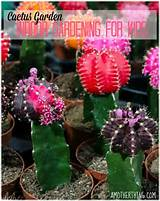 indoor gardening for kids a cactus garden