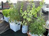 ... > Container Gardening > Container Vegetable Gardening Texas Ideas