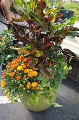 ... Color All Season With a Container Garden / Armstrong Garden Centers