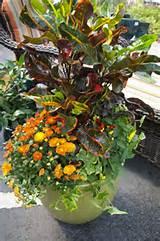color all season with a container garden armstrong garden centers