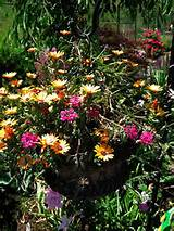 Container Garden Ideas | Find the Latest News on Container Garden ...