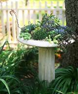 potted plant ideas gardening potted plants
