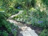 woodland gardens | Garden Ideas | Pinterest