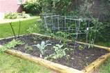 ... provided assistance in creating our happy little vegetable garden