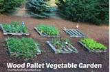 Wood Pallet Vegetable Gardening