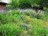 low water, low maintenance | Garden Ideas | Pinterest