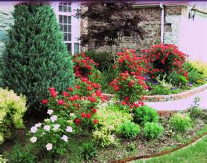 Knockout Roses at my front door: Garden Ideas, Knockout Roses, Country ...