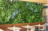 living wall vertical gardening tropical garden ideas pinterest