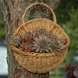 PlantsSmall Baskets, Gardens Ideas, Gift Baskets, Container Gardens ...