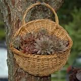 plantssmall baskets gardens ideas gift baskets container gardens