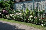 Small Rose Garden Ideas | Garden Design