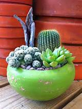 Indoor Cactus Garden Ideas