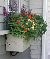 windowbox ideas country style