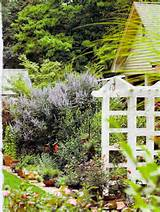 butterfly bush privacy screen idea possible garden ideas pinterest