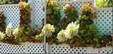 succulent garden ideas succulent wall garden ideas vertical succulent