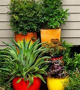 inspirations container gardening patio container gardening ideas