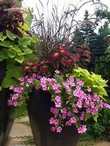 ... Full Sun | Patio Flowers | Pinterest | Patio, Entryway and Container