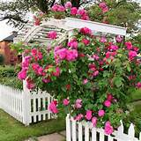 rose-garden4