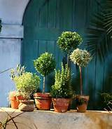 Potted herb garden | Garden Ideas | Pinterest