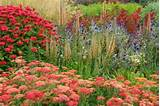 ideas border ideas garden ideas summer perennial perennials mid