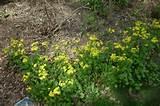 diy landscape woodland or shade gardening landscape st louis