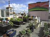 roof garden in San Francisco.... | Gardening Ideas | Pinterest