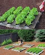 DIY Pallet Garden Idea | HowDoesYourGardenGrow | Pinterest