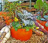 fall pumpkin planter create a fall container garden in a pumpkin to ...