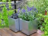 container gardening growing plants in containers