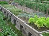 Container Vegetable Garden Plans - Gardener Gardens
