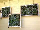 Succulent Gardening, California Style | Succulents, Hanging Succulents ...