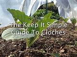 The Keep It Simple Guide To Low Tunnel Garden Cloches