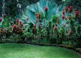 garden tropic garden plants hawaiian garden tropical gardens exot