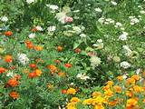 butterfly garden pics | Garden decor 2012