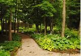 Seasons in the Valley: My Heart Is In It - a Grey County Garden