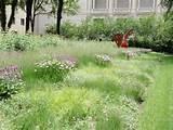 Roys Designs, Garden Dreaming, Northwind Perennial, Landscape Garden ...