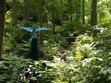 Pin by Sandra Mueller on Woodland Gardening Ideas | Pinterest